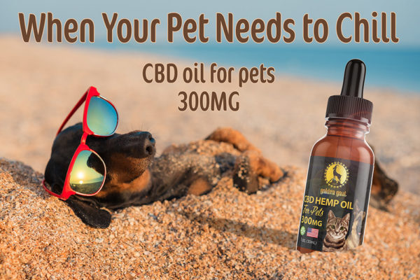 CBD for Pets On Beach lrz -
