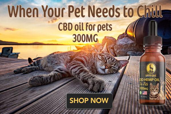 cat on dock lrz -