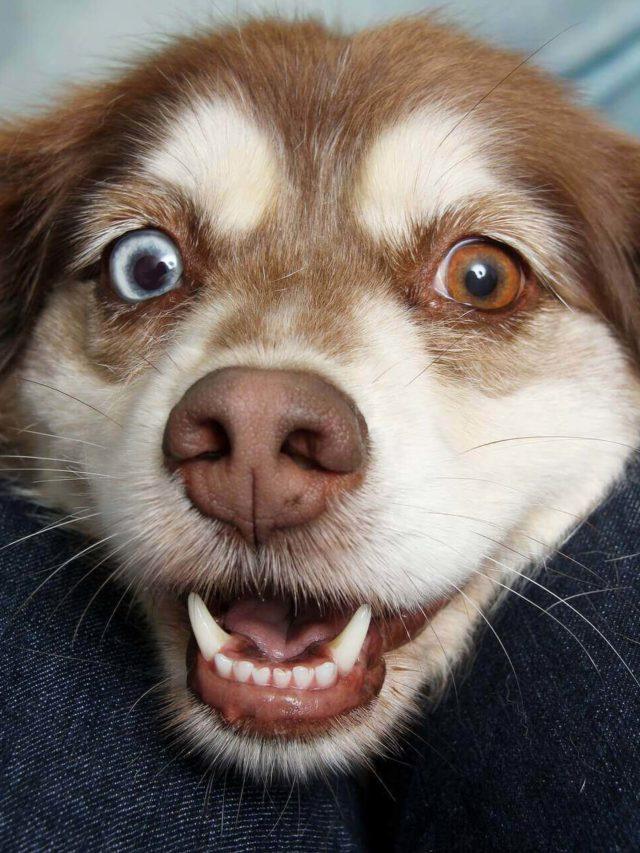 cropped Golden Goat CBD Dog Treats -
